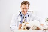 Dog at vet clinic
