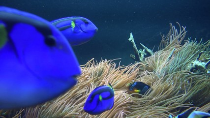 Fish, Sea Life, Aquariums, Animals, Nature