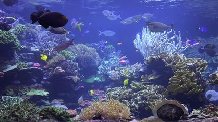 Coral Reefs, Fish, Sea Life, Underwater