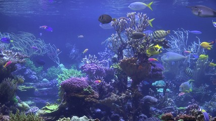 Coral Reefs, Fish, Sea Life, Underwater