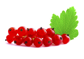 Branch of red currants isolated on white background