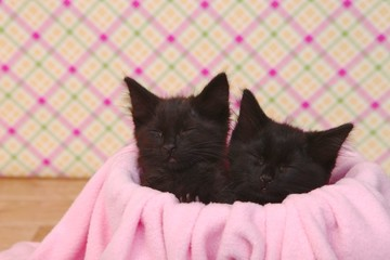 Cute Black Kittens on Pink Pretty Background