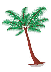 The Vector of Coconut Tree
