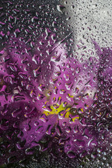 Flowers behind wet glass