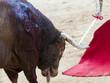 Постер, плакат: Corrida de toros toro antes de morir