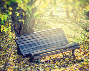 old wooden bench in autumn park