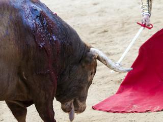 Corrida de toros, toro antes de morir