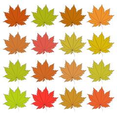 Set of autumn leaves. Raster