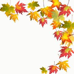Herbst: Fallende, bunte Blätter :)