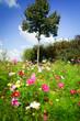 canvas print picture - Blühende Sommerblumen  am Wegesrand
