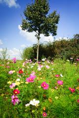 Blühende Sommerblumen  am Wegesrand