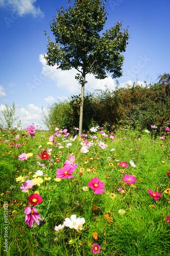 canvas print picture Blühende Sommerblumen  am Wegesrand
