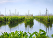 Постер, плакат: Floating gardens on Inle Lake Myanmar