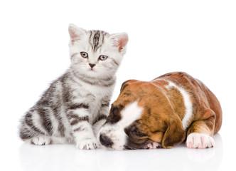 Scottish kitten near a sleeping puppy. isolated on white backgro