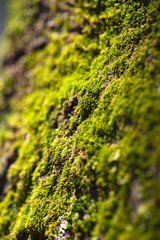 Green moss texture on the tree bark