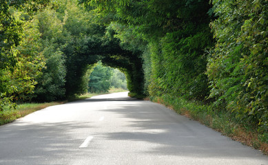 green tunnel in the trees above road