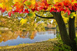 Goldener Herbst mit ruhigem See im Park :)
