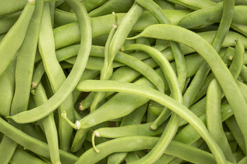 green bean background