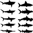 Sharks vector silhouette - 69534013