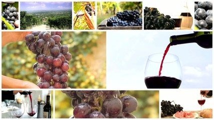land of wine collage