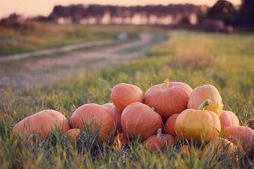 pumpkins at sunset