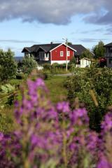 norvegia isole lofoten