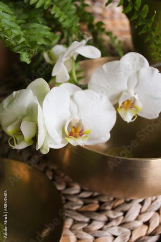 canvas print picture Klangschalen Orchidee