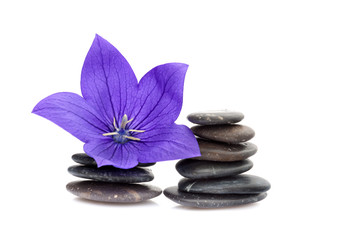 Volcanic obsidian balanced pebbles and purple tropical flower.