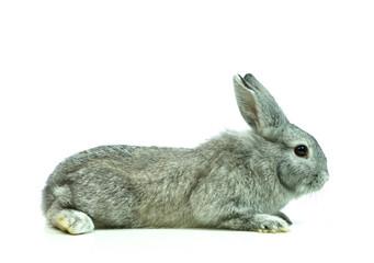 Junges Kaninchen von der Seite, freigestellt