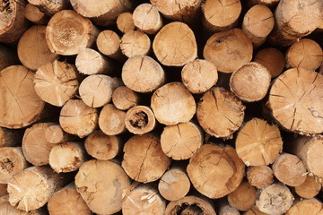 Woodpile of cut trees in the lumberyard