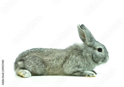 canvas print picture Junges Kaninchen von der Seite, freigestellt