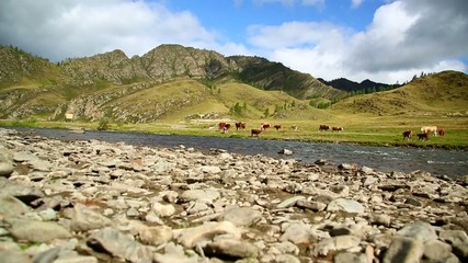 mountain river and cows, slider