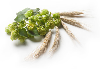 Hop and stem of a cereal plant