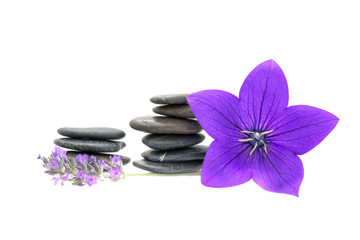 Balanced volcanic pebbles, lavender and bluebell flowers.