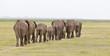 canvas print picture - Elephant Herd in Kenya