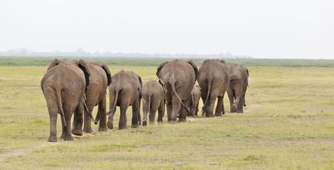 Elephant Herd in Kenya
