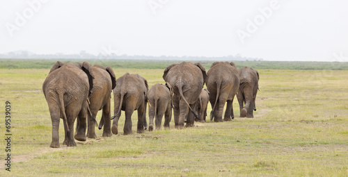 canvas print picture Elephant Herd in Kenya