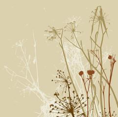 dry wild flowers