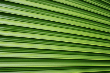 image of green palm leaf for background