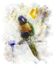 Watercolor Image Of Parrot (Rainbow Lorikeet)