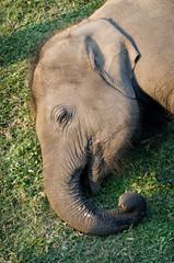 Elephant Breeding Centre in Chitwan, Nepal
