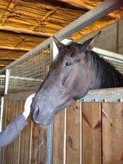 Acariciando un caballo