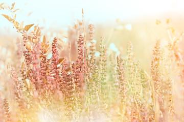 Purple meadow flower