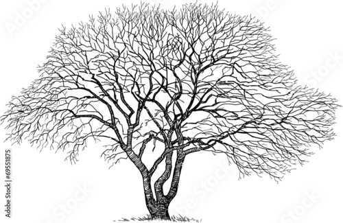 Fototapeta silhouette of the old tree