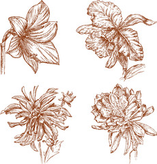 sketches of the flowers