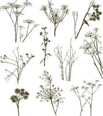 wild herbal plants