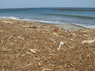 木くずの多い海岸