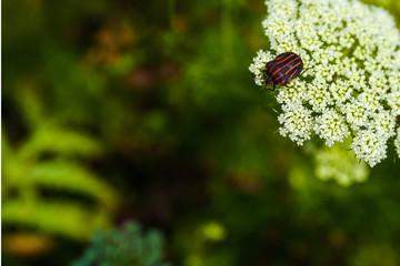 カメムシと花