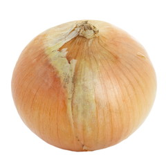 Fresh onion vegetable on a white background