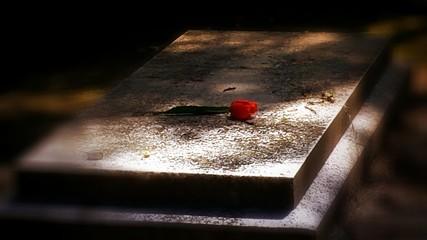 A Rose For My Beloved